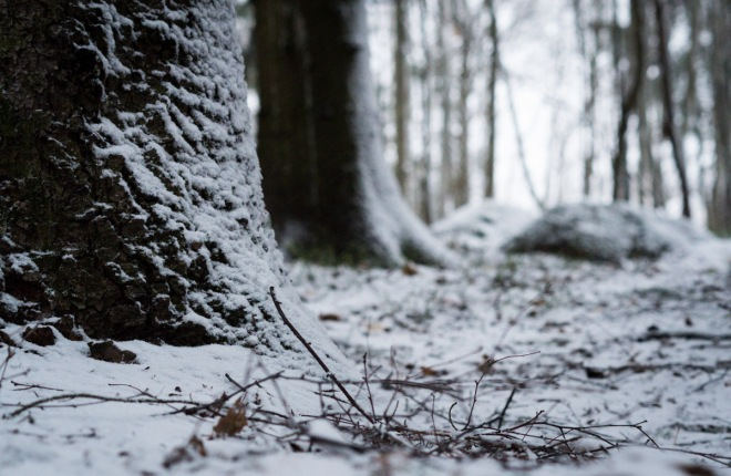 wintry_forest