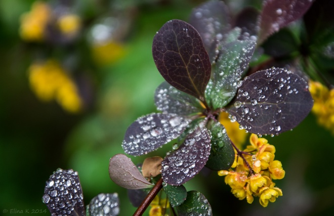 droplets&leaves