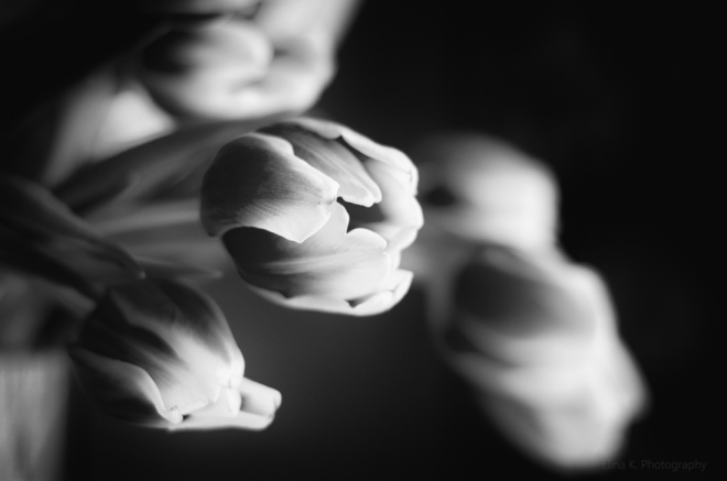 tulips-monochrome