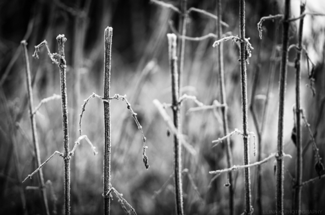 frost-